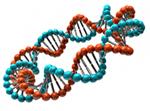 Генетический тест mtDNA