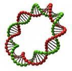 Генетический тест Y-DNA