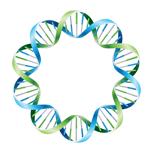 Полный ДНК-анализ (mtDNA и Y-DNA)